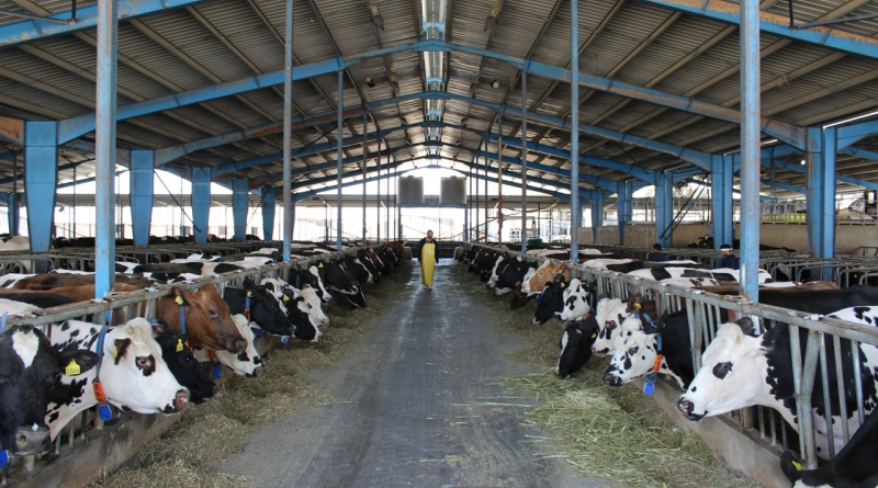 al ain dairy Average monthly salary al ain dairy farm in uae aed xxxxxx: salaries are hidden (this is a limited view.